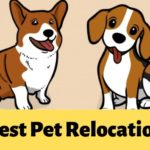 The 5 Options for the Best Pet Relocation in Singapore