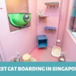 The 6 Options for the Best Cat Boarding in Singapore
