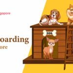 10 Options for the Best Dog Boarding in Singapore