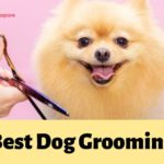 The 5 Options for the Best Dog Grooming in Singapore