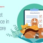 4 Options for the Best Pet Insurance in Singapore