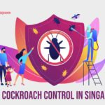 The 5 Options for Best Cockroach Control in Singapore