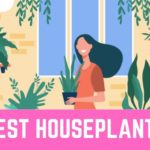 The 5 Best Houseplants in Singapore