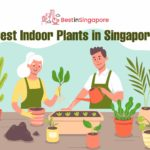6 Best Indoor Plants in Singapore to Grow at Home (2021)